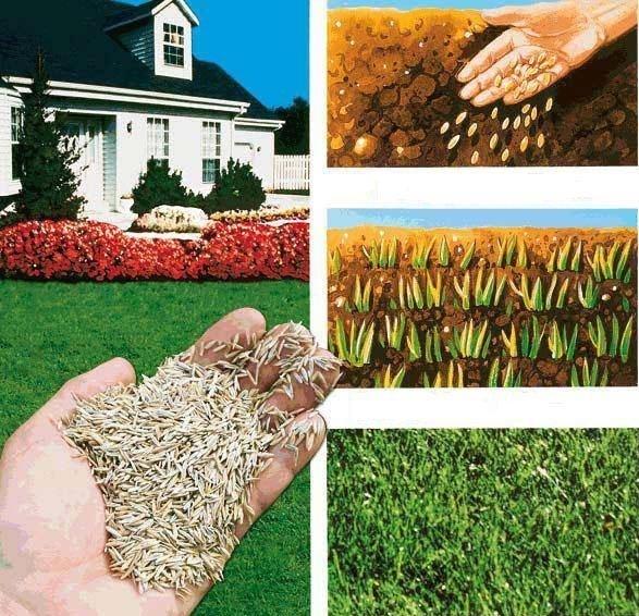 Подготовка участка под газон и посев травы своими руками 99