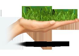 закладка газона